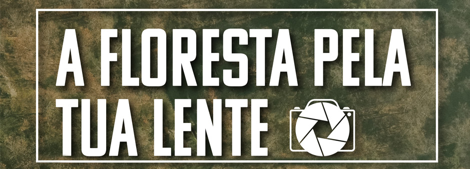 Concurso-Curtas-Careforest