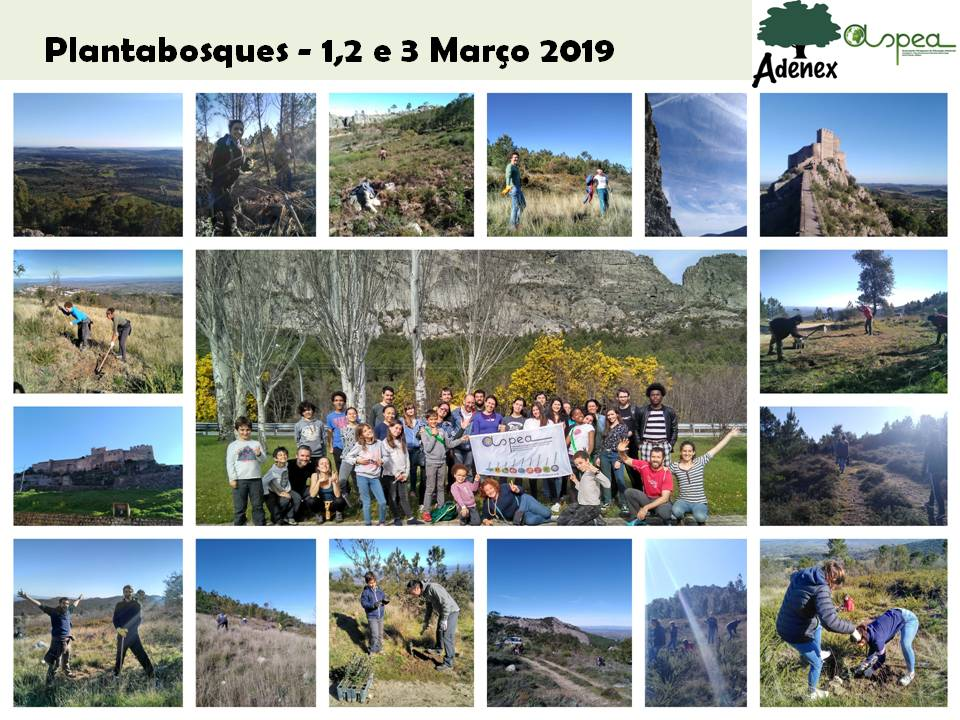cllage Plantabosques 2019